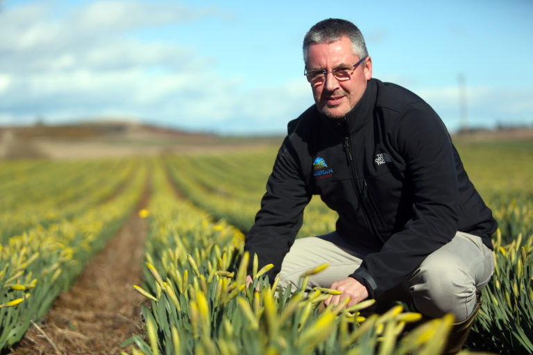 Daffodil growers at the mercy of time – and the weather