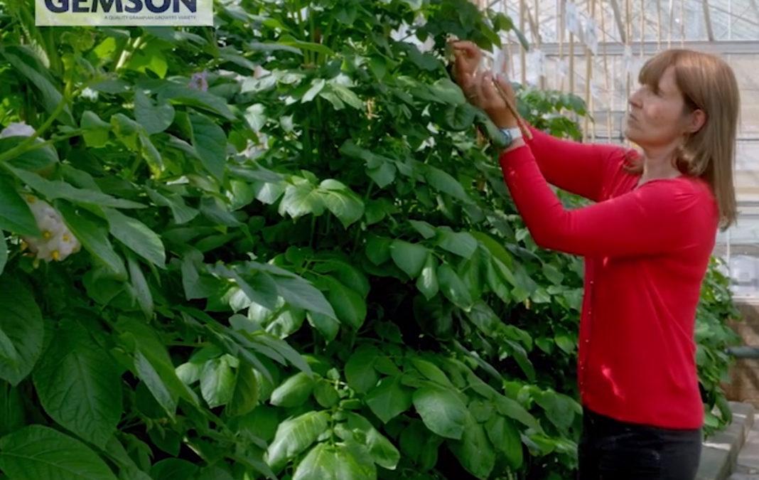 Gemson Marketing Film Launched